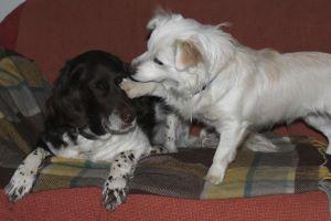 Tagesbetreuung hund köln